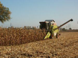 ingenieria agronomica