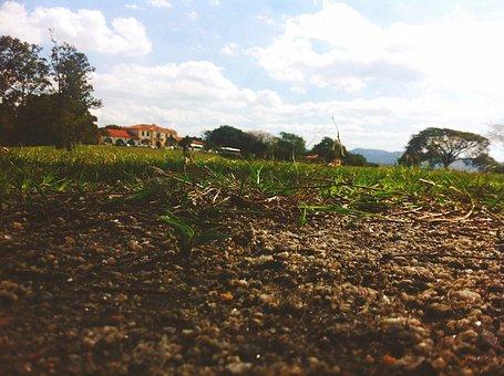 ing agronomica